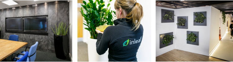 Inleaf plant display